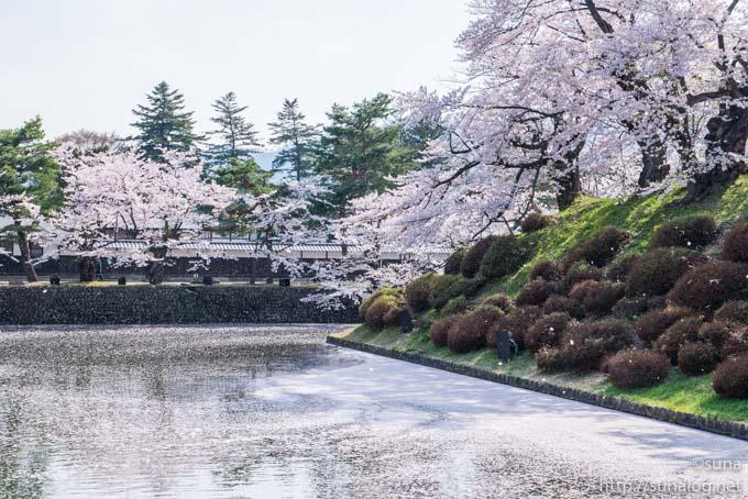 松が岬公園のお堀と桜