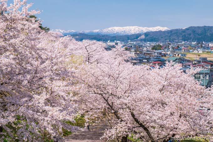 桜と朝日連峰