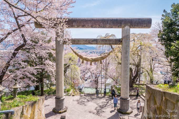 大鳥居と桜
