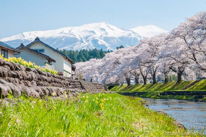 洗沢川の桜並木