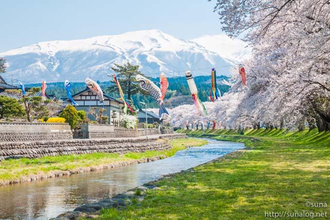 洗沢川の桜並木と鳥海山
