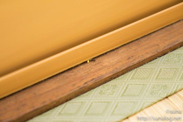 サッシの隙間から侵入するアリ