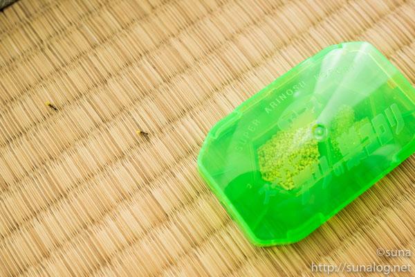 顆粒薬剤を巣へ運ぶアリ