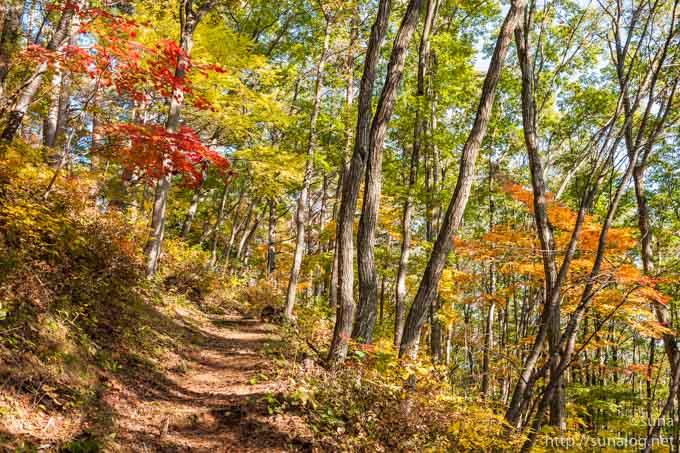 まつたけ山の紅葉