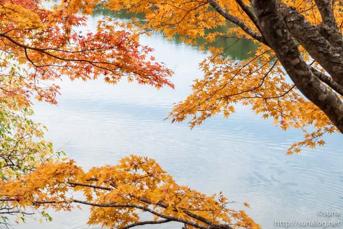荒沼のほとりの紅葉