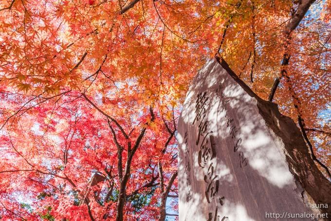 紅葉の烏帽子山公園