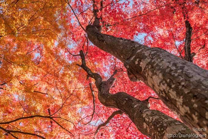 赤や橙の紅葉