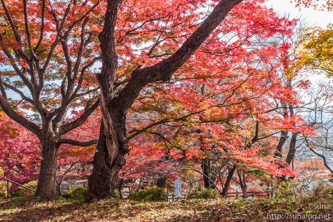 秋の烏帽子山公園