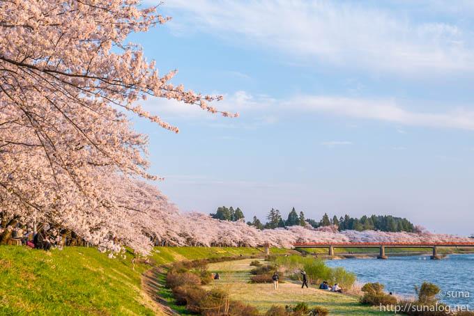 夕暮れの桧木内川堤の桜並木