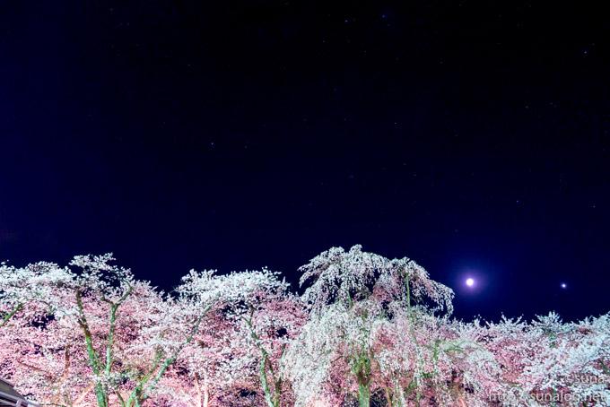 桜並木駐車場から見た桧木内川堤の夜桜
