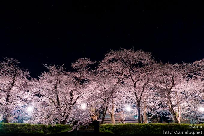 暗闇に浮かぶ桜