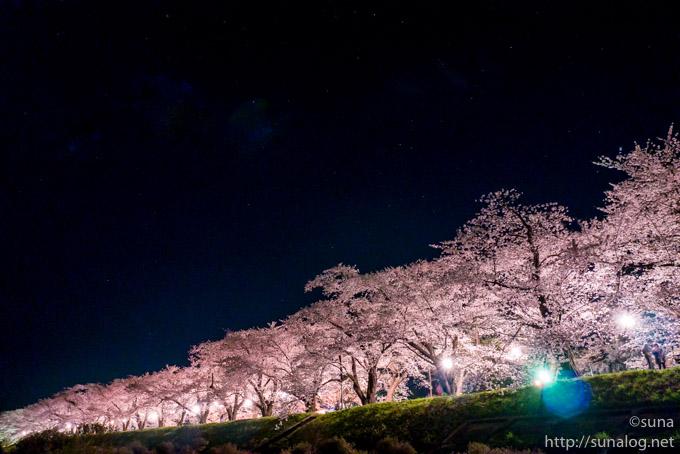 ソメイヨシノの桜並木のライトアップ