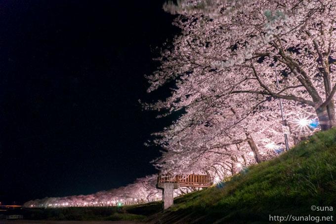 夜の角館桧木内川堤