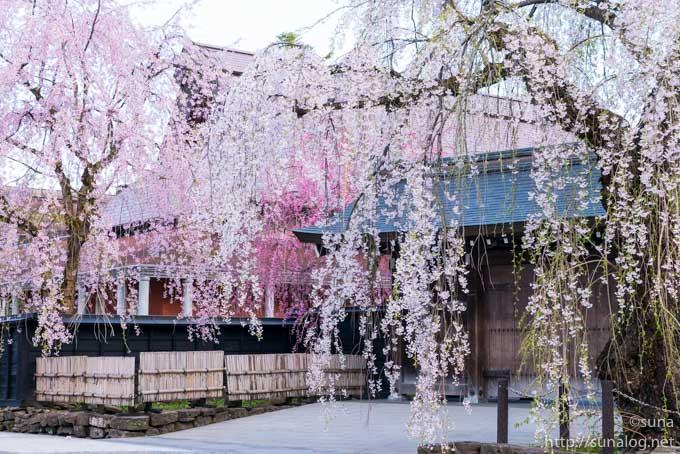 武家屋敷の門と枝垂れ桜
