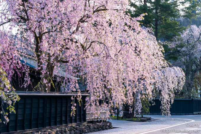 角館 武家屋敷の枝垂れ桜