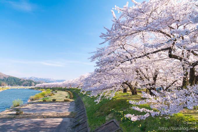角館 桧木内川堤の桜並木