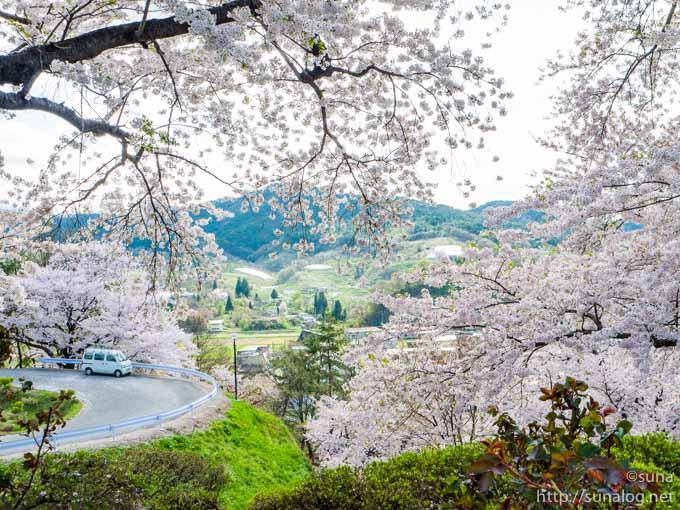 南陽市と桜