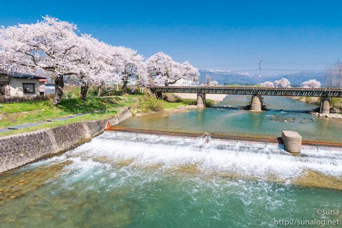 斉内川の桜並木と堰と鉄橋