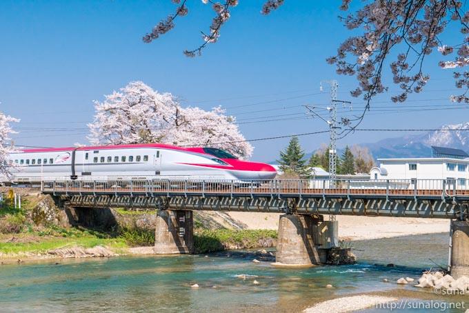 斉内川河川敷の桜と秋田新幹線