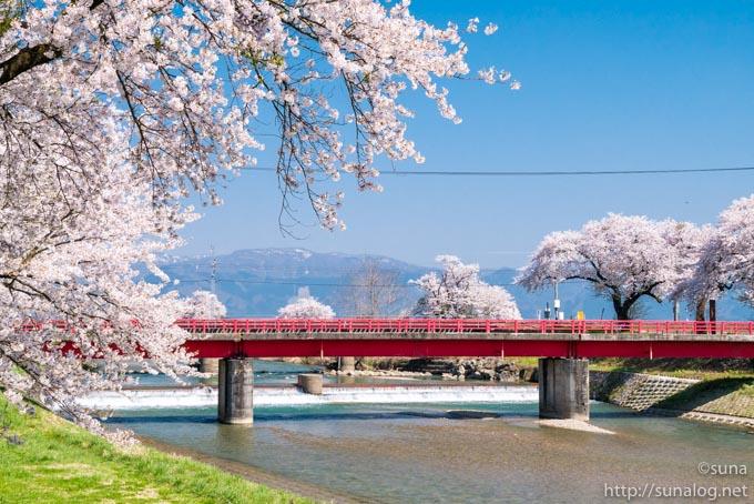 赤い橋と桜