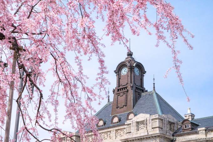 文翔館の時計塔と枝垂れ桜