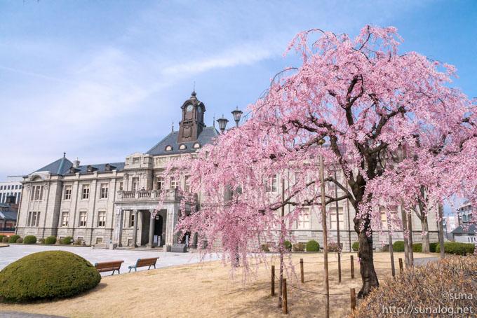 文翔館と枝垂れ桜