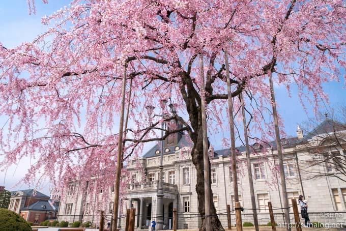 枝垂れ桜越しに見上げる文翔館