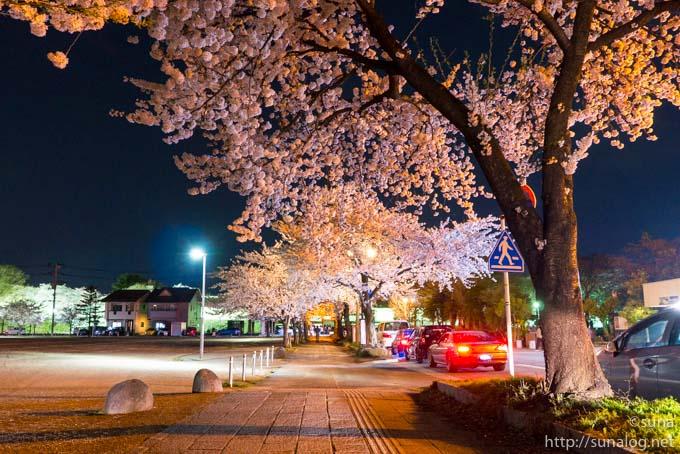 東大手門前の通りの夜桜