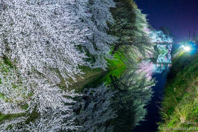 霞城公園のお堀と夜桜