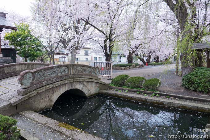 石橋と参道の桜並木