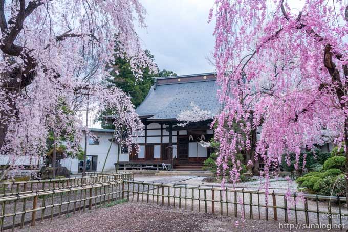 興禅寺と枝垂れ桜
