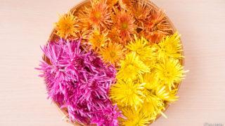 山形の食用菊「もってのほか」3種類